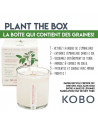 Lavande - Bougie à Planter